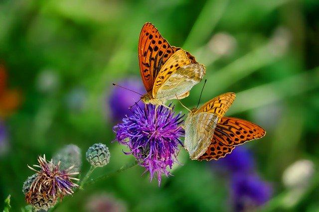 Schmetterling von pixaby